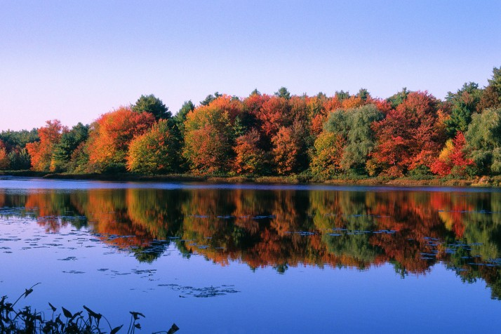 Near Concord, Massachusetts --- Autumn Trees at Walden Pond --- Image by © Mick Roessler/Corbis