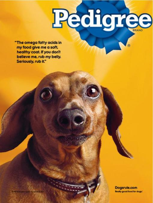 pedigree-dog-food-dachshund-small-44140